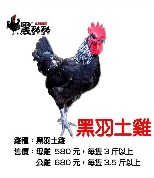 正花東黑羽土雞