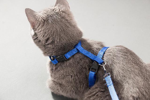 工字型貓咪牽繩