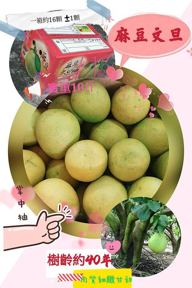 正宗老欉~經典麻豆文旦·掌中柚