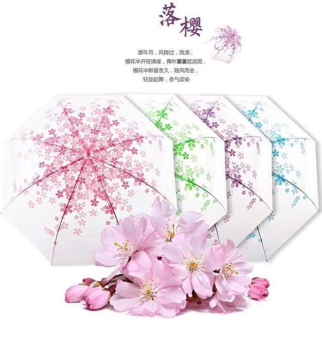 浪漫櫻花傘🌸