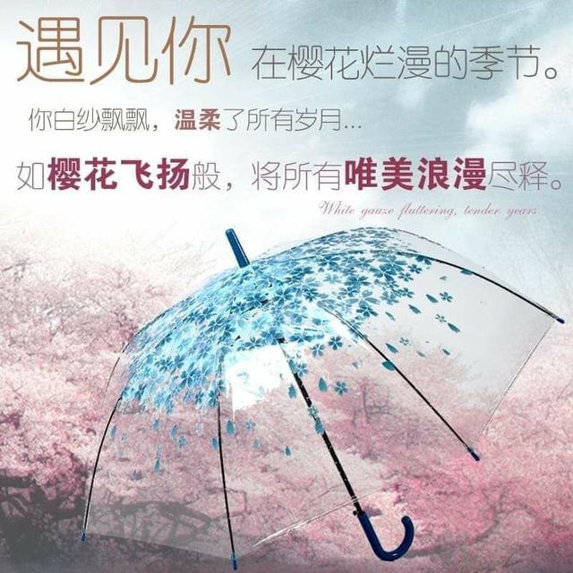 櫻花唯美PVC透明晴雨傘