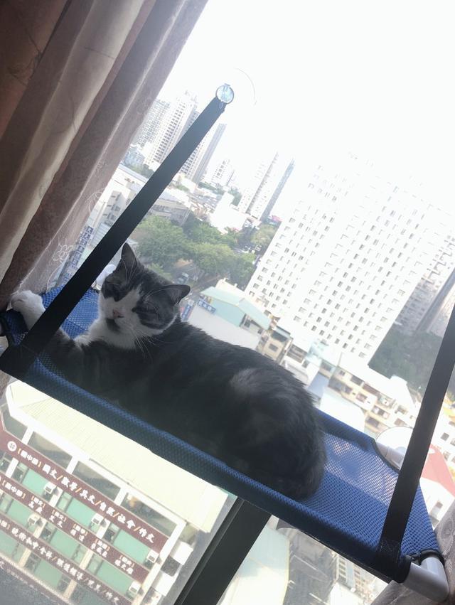 貓吊床 觀景台吊床.貓窩吊床