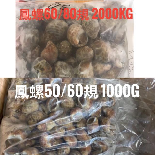 bhj 活凍鳳螺:60/80規(2000g)、50/60規(1000g)。