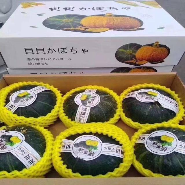 廠商現貨 到貨速度快 端午節快到嘍~還在挑選禮物嗎?? ~南瓜界新寵 蔬菜界的網紅🎃貝貝南瓜